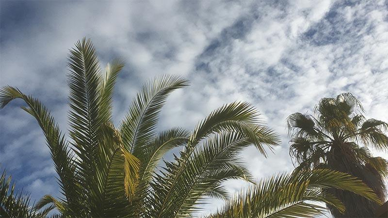 Unternehmer Coach Mallorca - Palme - Wolken