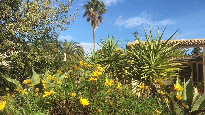 Unternehmer Coach Mallorca - Kaktus - Garten - Palme - blauer Himmel